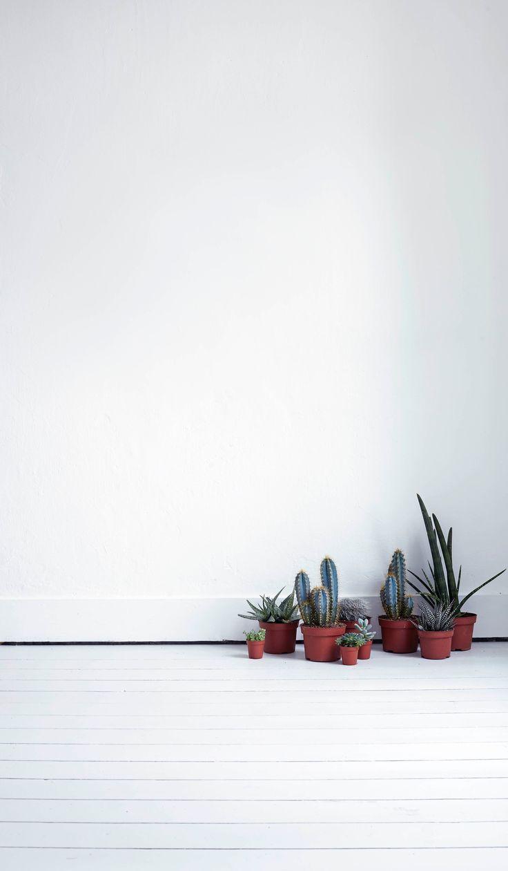 Cactus mi casa no es de mu ecas blog y asesor a online - Mi casa no es de munecas ...