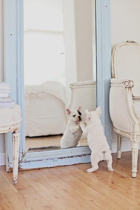 perros en casa 01