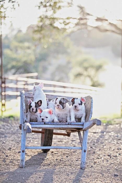 perros en casa 08