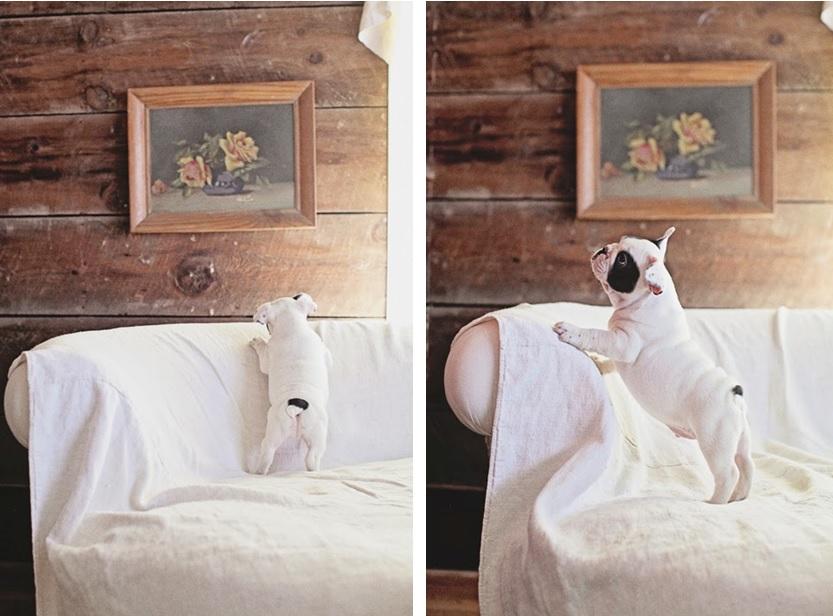 perros en casa 12