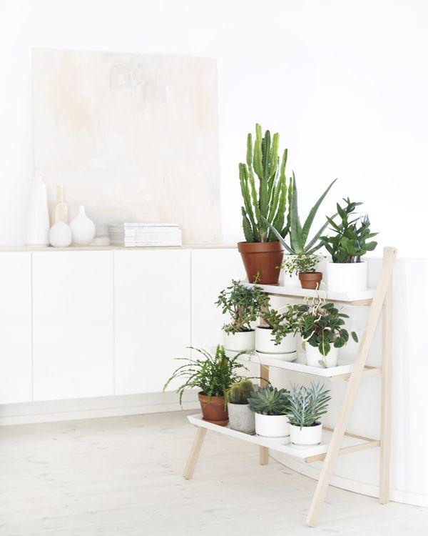 Deco con cactus 14